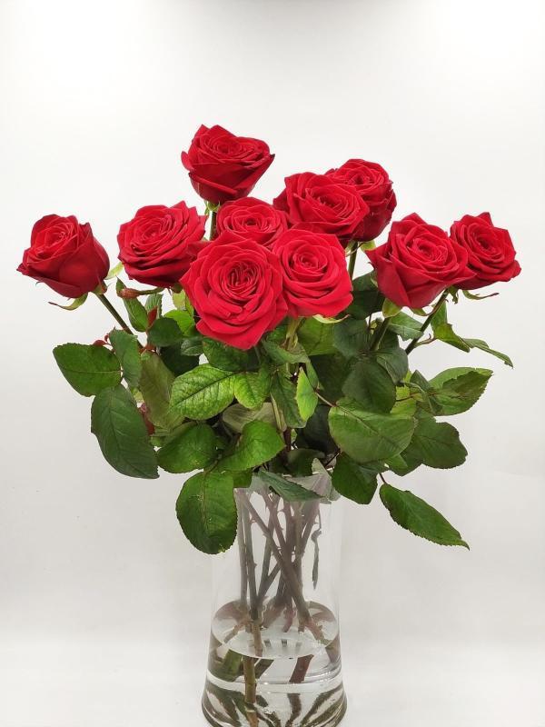Rode rozen rotterdam